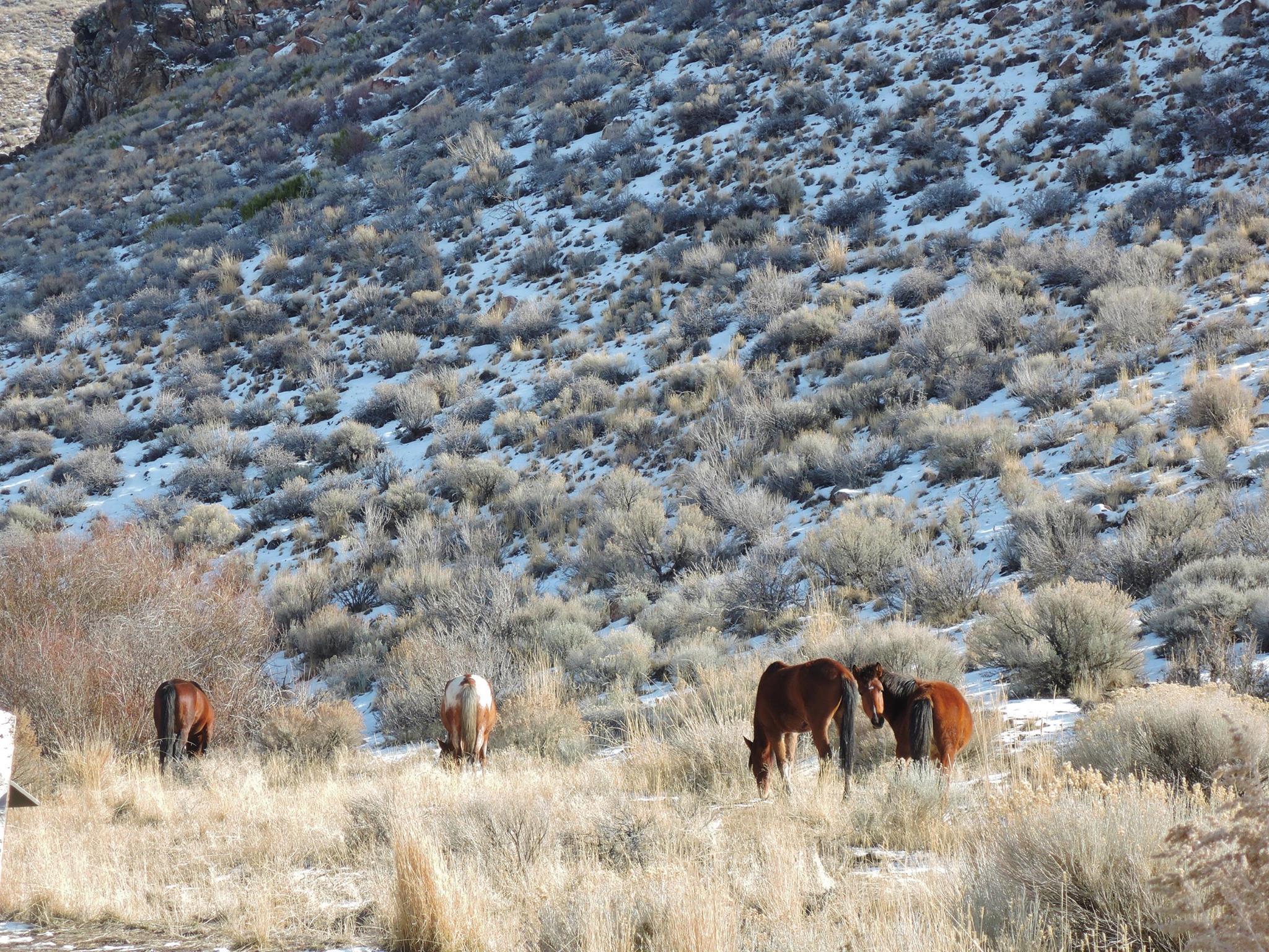 Wild Horses at Washoe Lake State Park